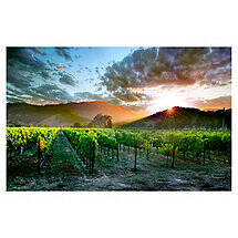 Wine Country Sunset Print on Canvas